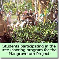 Mangrovetum Project
